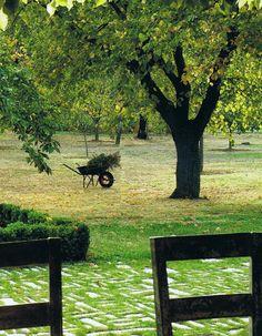 Walnuts groves // Une noiseraie -