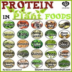 rawlivingfoods:  Did you know that a plant based diet is a protein rich diet? Here are some foods with tons of protein that are easily absorbed by our bodies!