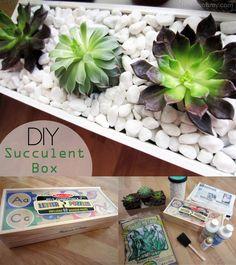 Plantas decorativas reciclando una caja de madera