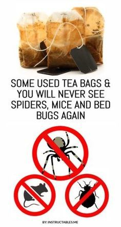 Used Tea Bags to Completely Get Rid Of Spiders, Mice and Bed Bugs Used tea bags to completely get rid of mice and spiders. Use this natural method and never see spiders and mice again at your home. Deep Cleaning Tips, House Cleaning Tips, Cleaning Hacks, Natural Cleaning Solutions, Pest Solutions, All You Need Is, Mice Repellent, Get Rid Of Spiders, Getting Rid Of Mice