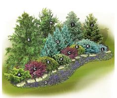 New Backyard Privacy Landscaping Trees Plants 69 Ideas - All For Garden Evergreen Landscape, Evergreen Garden, Evergreen Shrubs, Evergreen Trees For Privacy, Best Trees For Privacy, Evergreen House, Privacy Landscaping, Front Yard Landscaping, Privacy Shrubs