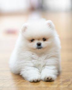 Loving U, Husky, Cute Animals, Wallpaper, Dogs, Fantasy, Instagram, Cute Dogs And Puppies, Super Cute Animals