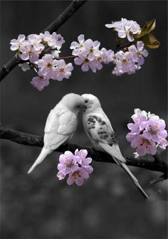 Best friend knows all your secrets, fears and dreams! No matter what happens, it will always be with you! The best friend never stops believing in you! All Birds, Cute Birds, Pretty Birds, Beautiful Birds, Animals Beautiful, Exotic Birds, Colorful Birds, Bird Pictures, Animal Pictures