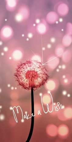 Make a Wish… … Happy Birthday! Make a Wish… More Happy. Best Birthday Quotes, Happy Birthday Images, Happy Birthday Greetings, Birthday Messages, Birthday Pictures, It's Your Birthday, Happy Birthday Niece, Happy Birthday Beautiful Lady, Happy Birthday Wishes For A Friend