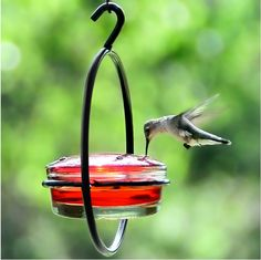 Decorative Hummingbird or Wild Bird Feeder, Glass Bird Seed Dish, G423F - 1 Hanging Garden Bird Food Dish. Made of Recycled Glass and Metal. Also use as a Mealworm Feeder, Jelly or Suet Container. Red Glass Lid has 4 Feeding Ports. All Metal Parts Powder Coated for Long Lasting Finish. Feeder Height: 6 3/4 in. Width: 6 1/4 in. Length: 4 in. Capacity: 3.4 oz. / 100ml.