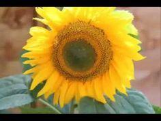 PITA Guided Meditation on Yellow - The Solar Plexus