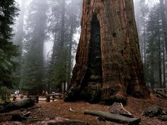 Sequoia National Park ○ I so want to go here!!!