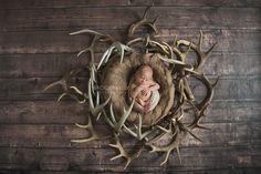 Newborn photo with antlers. Daddy likes to hunt {Brooke Kelly Photography}