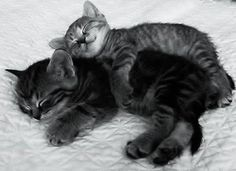 Image result for cats in bed