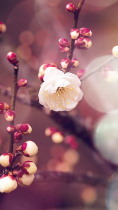 66 Ideas For Wall Paper Flowers Desktop Pictures Spring Wallpaper, Macbook Wallpaper, Tree Wallpaper, Images Wallpaper, Wallpaper Iphone Disney, Flower Wallpaper, Wallpaper Backgrounds, Beautiful Wallpaper, Simple Backgrounds