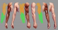 Hands by Sinto-risky on DeviantArt Arm Anatomy, Anatomy Poses, Anatomy Study, Human Drawing Reference, Art Reference, Anatomy Sculpture, Dynamic Poses, Anatomy Tutorial, Sea Waves
