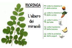 Moringa: l'albero miracoloso che può purificare l'acqua non potabile. E' interamente commestibile ha proprietà provate dalla scienza. Scoprine i benefici! Superfoods, Health, Green, Moringa Oleifera, Health Care, Super Foods, Salud