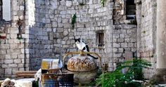 Photo Series: Street Cats of Dubrovnik, Croatia.
