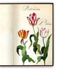 Hortus amoenissimus... by Franciscus de Geest