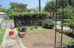 Ditch your lawn -- and maybe get paid for it! TURF REMOVAL | Little Homestead in the City - the Urban Homestead Journal
