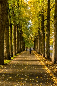 Autumn in Vigelandsparken, Oslo
