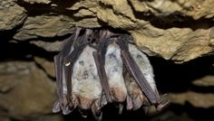 Facts On Bats