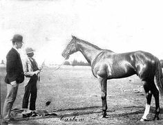 Carbine, thoroughbred racehorse