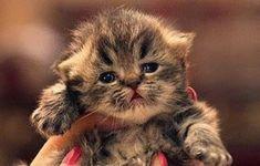Love This Kitty! – 14th November 2014 #Animals