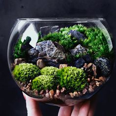 Terrarium making