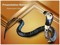 Cobra Snake Powerpoint Template is one of the best PowerPoint templates by EditableTemplates.com. #EditableTemplates #PowerPoint #Poisonous #Cobra #King Cobra #Danger #Reptilian #Spitting Poison #Wildlife #Snake Bite #Wild #Cobra Snake #Snake #Dangerous #Venomous #Serpent