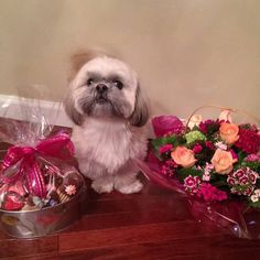 I couldn't stop wagging my tail I was so excited to see my #Mom this morning. #happymothersday  Hope all the mama's and grandma's have a great day. #ilovemymom #shegivesmetreats #imsuretheresmore #buttreatsaremyfavorite #youdamanMa  #Prescot #shihtzu #shihtzusofinstagram #dogstagram #dogsofinstagram #furbaby #shihtzuswag #instapet #instadog #instapuppy #dogfessional #woofpackbros #woofpackhotties #lacyandpaws #barkpost  #dogsandpals #buzzfeedanimals #dogdaily #Brooklyn #buzzfeed #nycdogs…