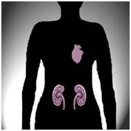 The consumption of highly contaminated water can cause damage to the heart and kidneys.