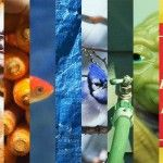 Colors: A New Collection Film from The Mercadantes