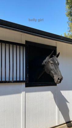 Cute Horses, Pretty Horses, Horse Love, Beautiful Horses, Beautiful Places, Horse Ranch, Horse Pictures, Horse Girl, Photo Dump