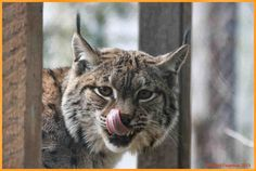 See 10 photos and 2 tips from 82 visitors to Fondation du Parc Zoologique la Garenne. Canton, Nature, Animals, Zoo Park, Beautiful Places, Naturaleza, Animales, Animaux, Animal