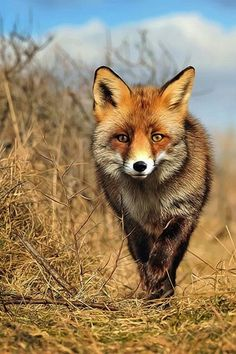 The fox symbolizes feminine magic of camouflage, shape-shifting and invisibility.