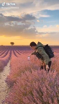 """95 curtidas, 1 comentários - Tan Vicente (@tanvicente) no Instagram: """"Um bom celular com câmera = vídeo perfeito! 👍🏻"""" Lavender Fields, Monument Valley, Wildlife, 1, Earth, How To Get, Sunset, Landscape, Instagram"""