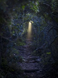 Light in the Forest, South Africa