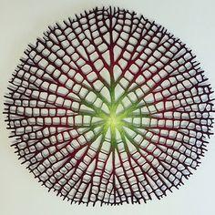 Hojas y flores bordadas por la artista Meredith Woolnough.