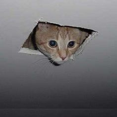 """** """"Don't miss 'Complete Hiss-tory of Cats' on   internet."""""""