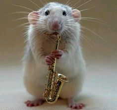 'My Saxophone' (a photograph of one of her cute pet rats) by Ellen van Deelen Mouse Pictures, Animal Pictures, Funny Pictures, Mouse Photos, Adorable Pictures, Creative Pictures, Funny Mouse, Cute Mouse, Funny Rats