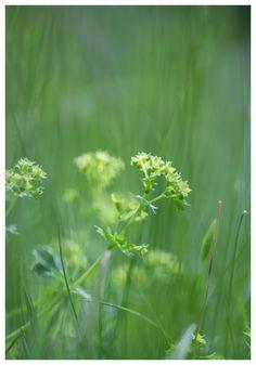 #green #painting #dream #beautiful #photography #valokuvaus #vihreä #nature #luonto #poster #maalaus