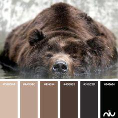 Bear Color Palette