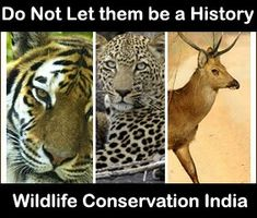 essay on the independence day essays essay on s wildlife heritage
