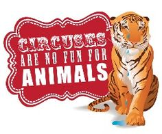 Circuses are no fun for animals! We've been campaigning for an end to the use of wild animals in travelling circuses in England and Wales for over a decade.