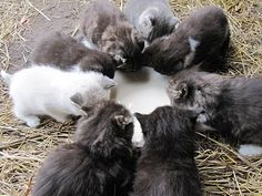 *Farm kittens...seriously nothing better than fresh barn babies!