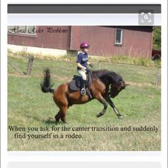 hahahah all the time with my horse Funny Horse Memes, Funny Horse Pictures, Funny Horses, Cute Horses, Horse Love, Beautiful Horses, Funny Animals, Animal Pictures, Beautiful Cats