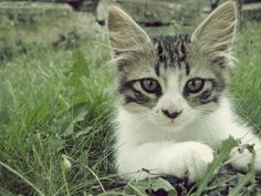 #cat #cats #kitten #kittens #pet #pets #photooftheday #catoftheday #cute