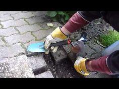 Zahmer Eichelhäher bei der Gartenarbeit - YouTube