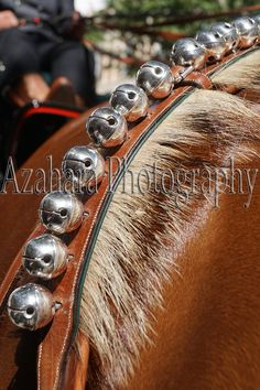 6c2ec4b290d7dcbf38ffe0eb6559549d horse harness badger four pre horses in hand with spanish horse harness \