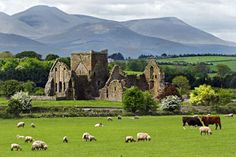 "pagewoman: ""  Hore Abbey, Rock of Cashel, County Tipperary, Republic of Ireland by Garry Bryant """