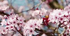 Spring Photography, Page Photography, Colorful Photography, Floral Photography, Fauna Photography, Flowers Photography
