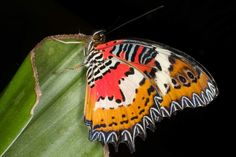 Buyrareseeds.com share with your friends that would love a butterfly garden!