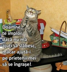 Cute Funny Animals, Cute Cats, Funny Cats, Crazy Cat Lady, Crazy Cats, Miaou Miaou, Cute Animal Pictures, Funny Pictures, All About Cats