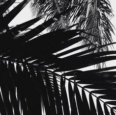 palms #ELLEMERswimwear Sport. Swimwear. Hawaii.
